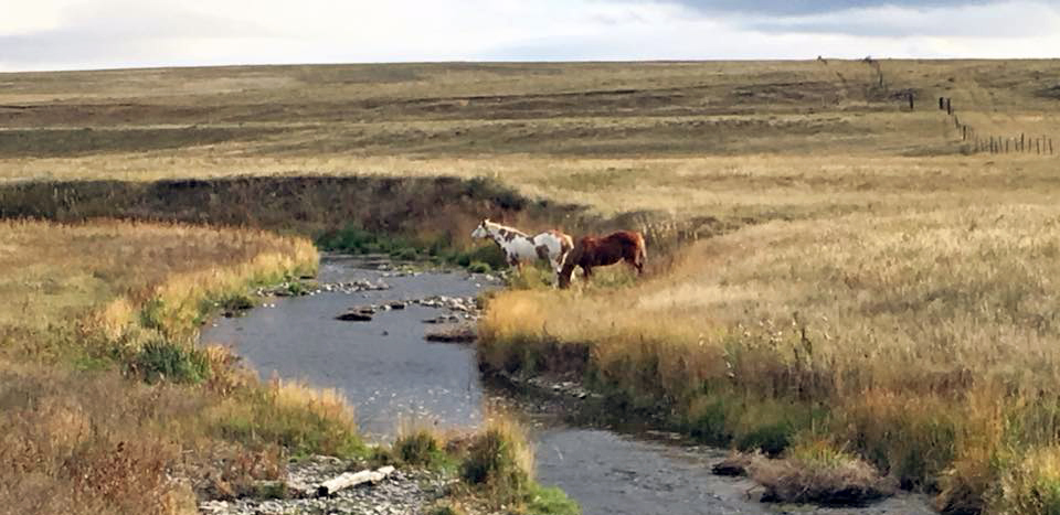 Horses on Crow Creek (Photo courtesy of Karryn MacDonald)